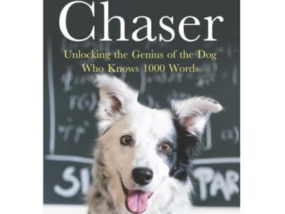 Chaser dog of 1000 words