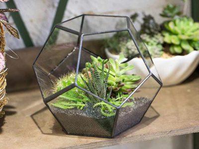 NCYP Enclosed Geometric Terrarium