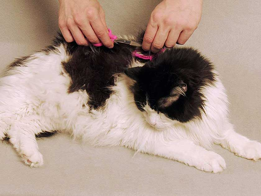 Scaredy Cut Silent Pet Grooming Kit for Dog, Cat and All Pet Grooming