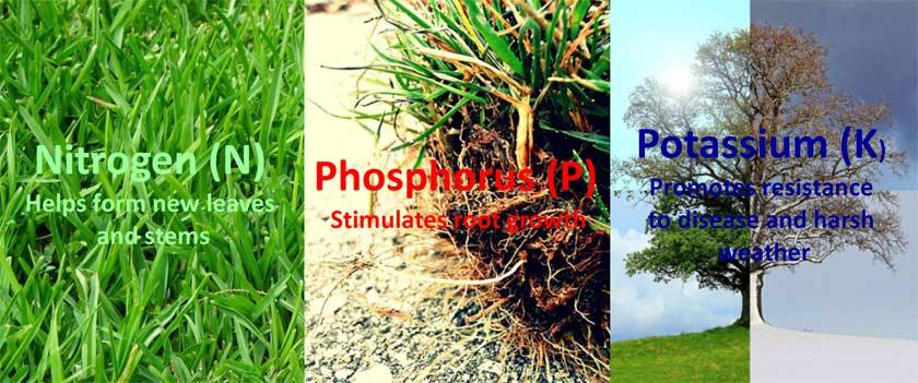 chemical NPK fertilizers