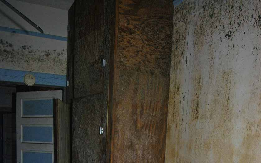mold on the walls