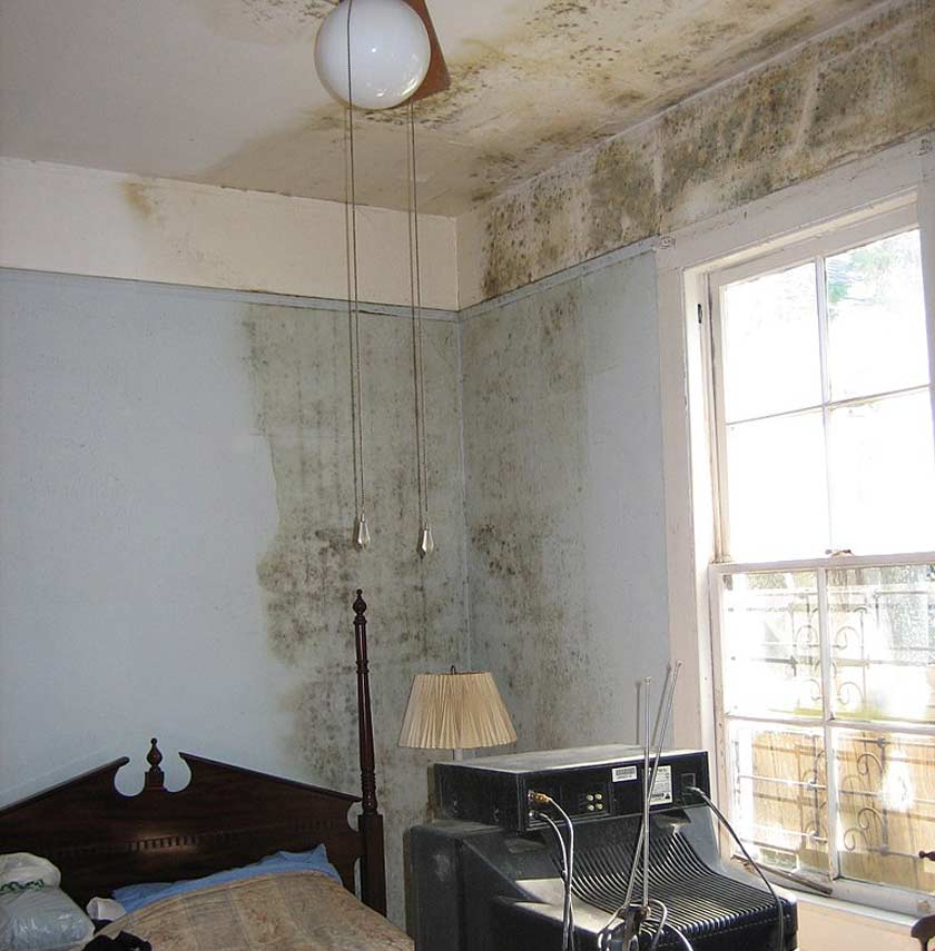 Mold growing in a New Orleans house after Hurricane Katrina