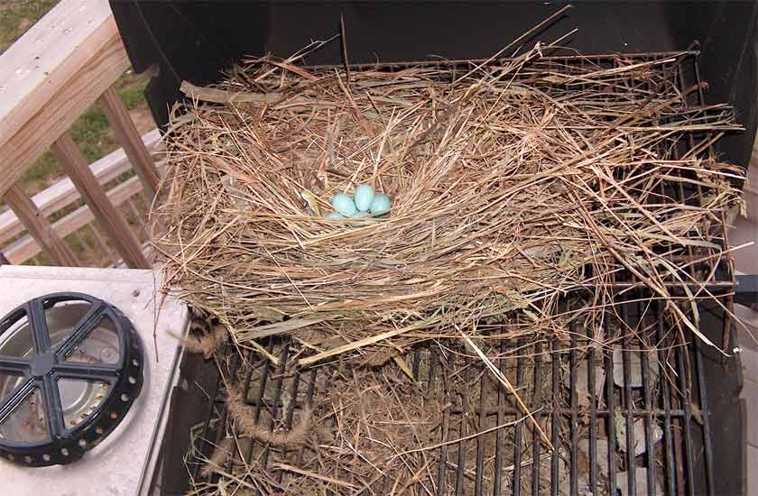 nest on grill