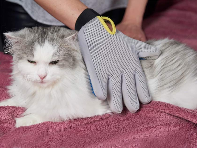 pat your pet grooming glove