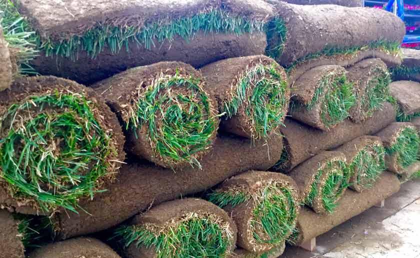 sod rolls