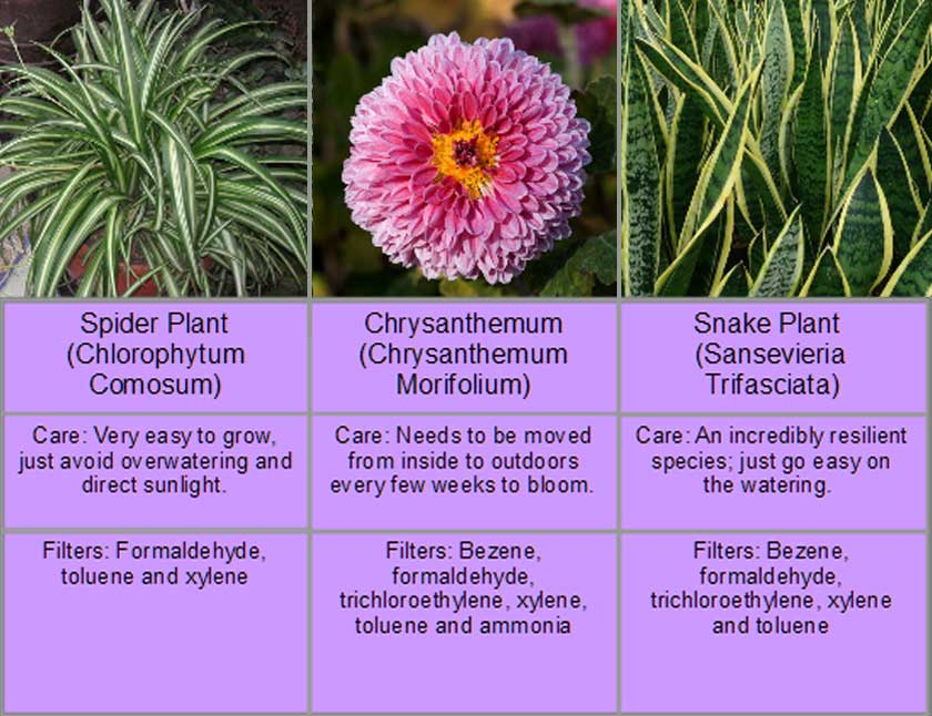 three types of plants that purify air